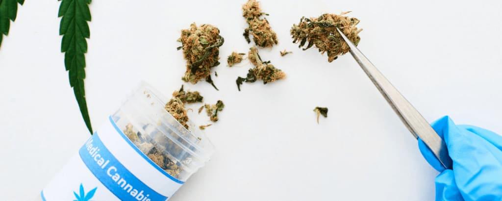 medyczna marihuana- susz